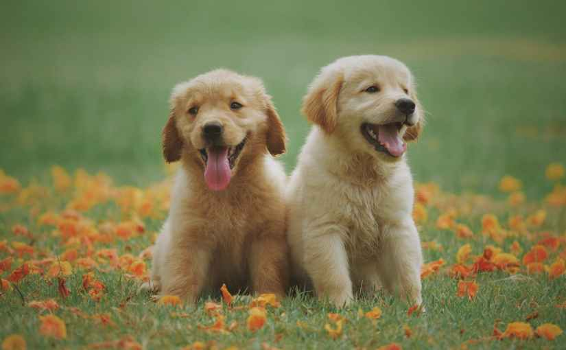 """If I Could Name All the Guide Dog Puppies 